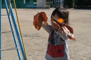 大きな落ち葉6