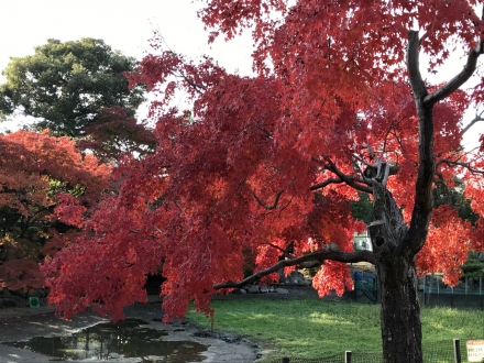 181130higashiyama zoo (6)