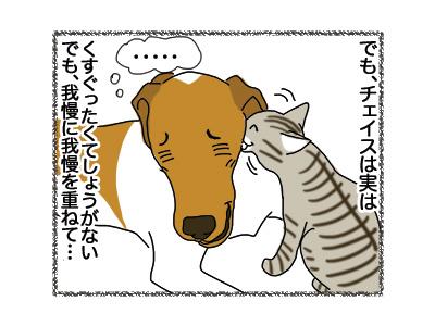 01112018_dog2.jpg