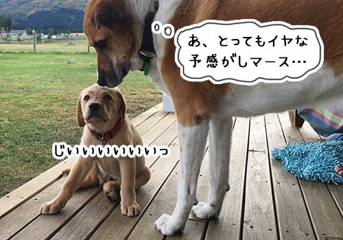 02012019_dog8.jpg