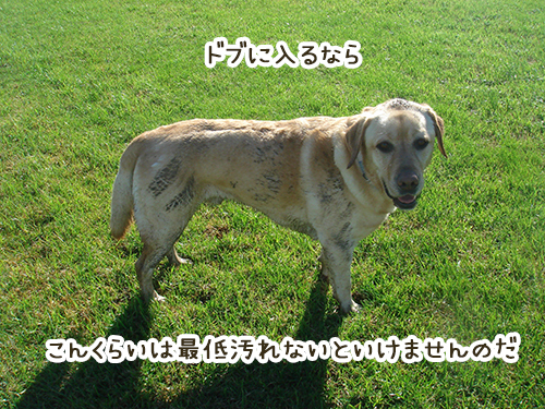 03122018_dog7.jpg