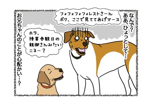 04022019_dog5.jpg