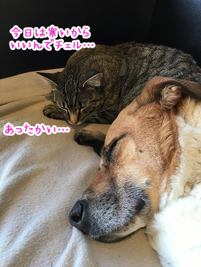 05112018_dog3.jpg