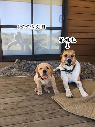 09012019_dog3.jpg
