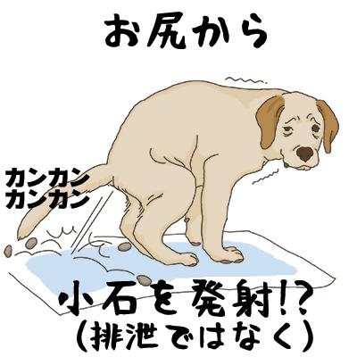 09112018_PuppyYebi2.jpg