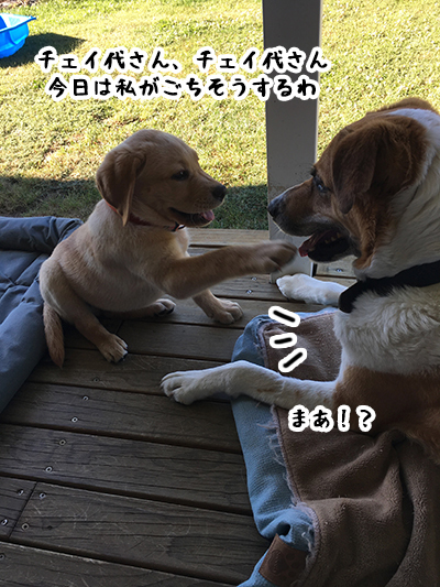10012019_dog1.jpg