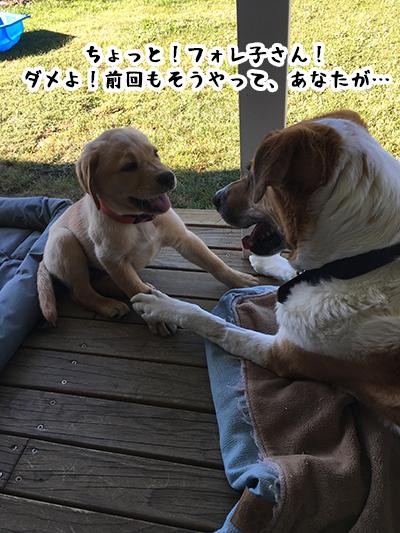 10012019_dog2.jpg