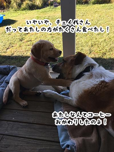 10012019_dog3.jpg