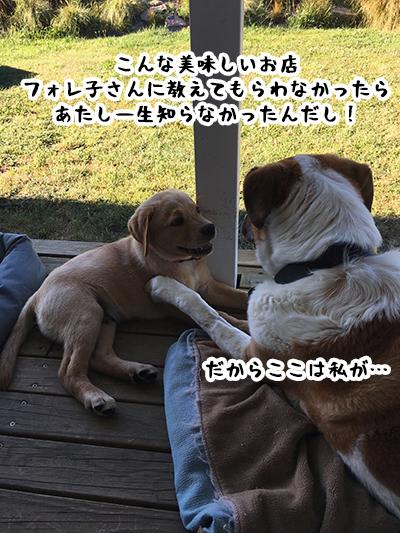 10012019_dog4.jpg