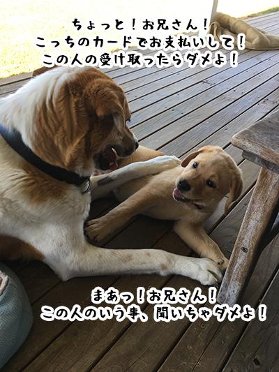 10012019_dog5.jpg