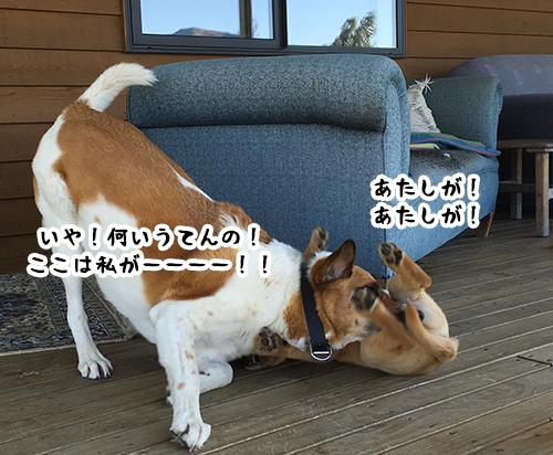 10012019_dog6.jpg