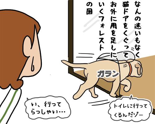16012019_dog1mini.jpg