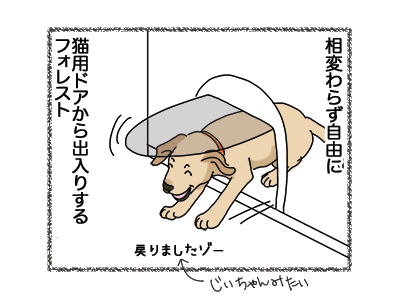 17012019_dog1.jpg