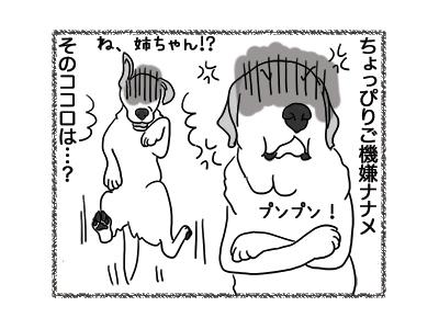 20122018_dog3.jpg
