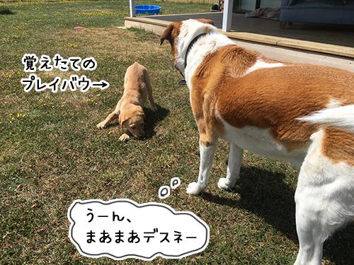21012019_dog2.jpg