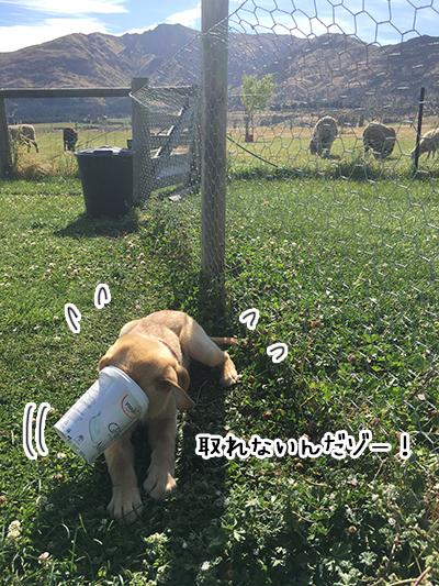 21012019_dog5.jpg