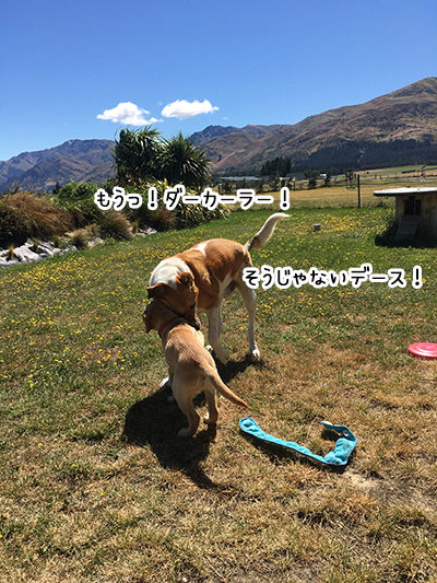 23012019_dog2.jpg