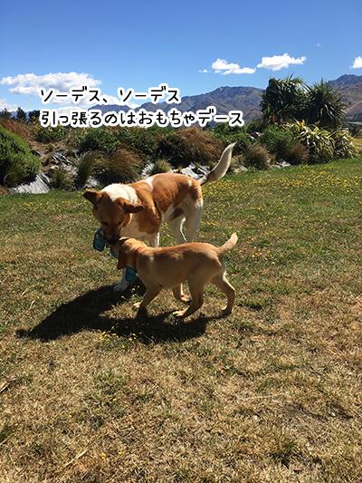24012019_dog3.jpg