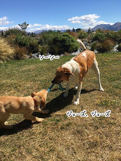24012019_dog4.jpg