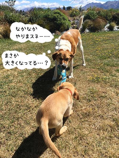24012019_dog8.jpg
