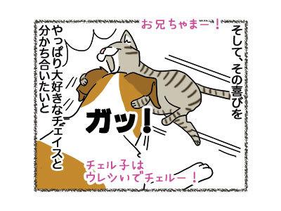 28112018_cat2.jpg