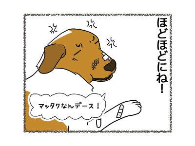 28112018_cat5.jpg