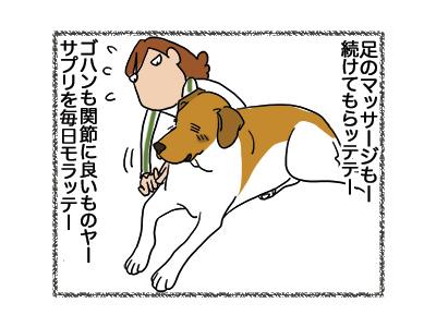 29102018_dog3.jpg