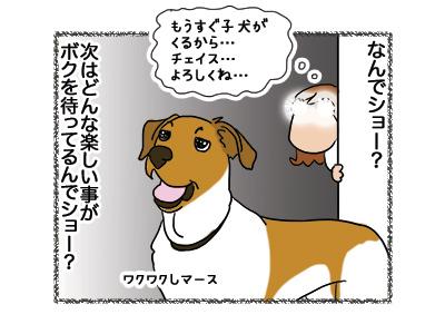 29102018_dog4.jpg