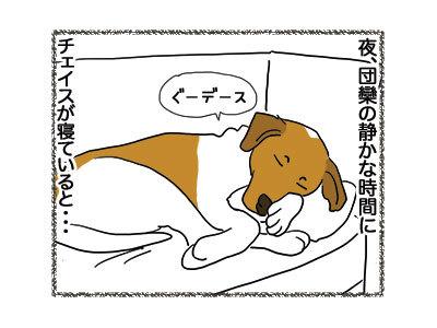 29112018_dog1.jpg