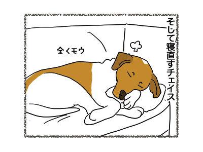 29112018_dog4.jpg