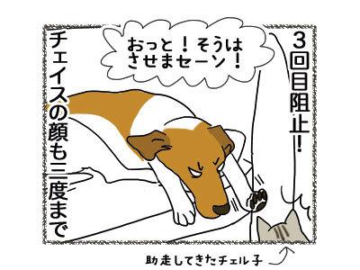 29112018_dog8.jpg