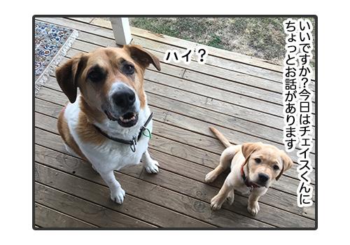 30012019_dog1.jpg
