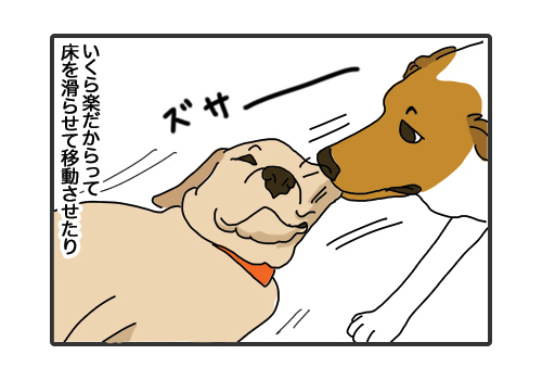 30012019_dog3.jpg