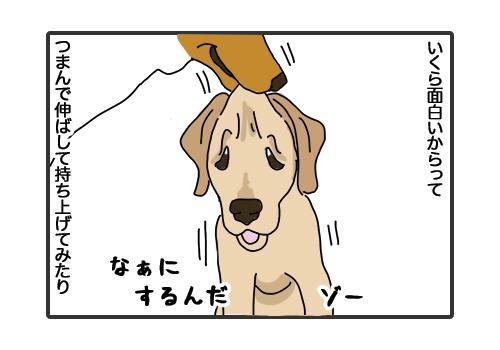 30012019_dog4.jpg