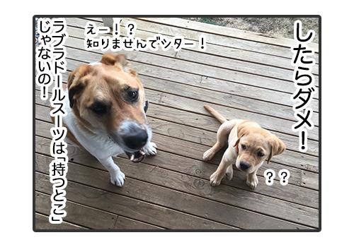 30012019_dog5.jpg