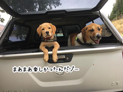 31012019_dog1.jpg