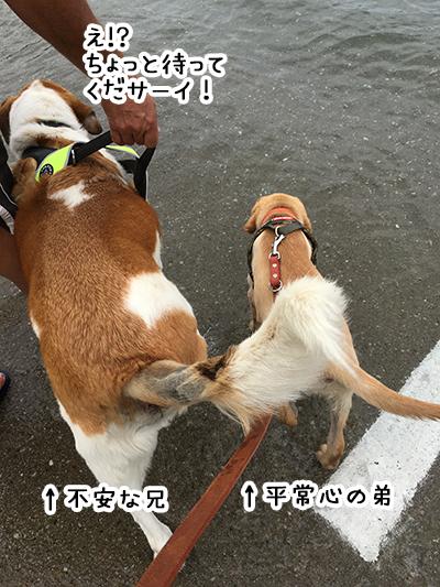 31012019_dog2.jpg