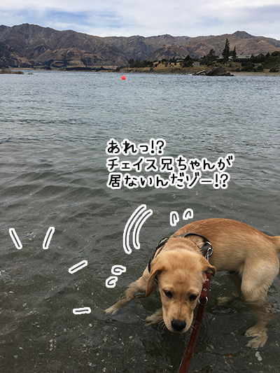 31012019_dog4.jpg