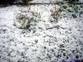 初雪を楽しむ1