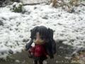 初雪を楽しむ2
