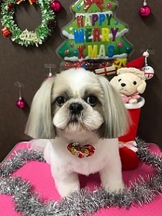 12月21日クッキーちゃん