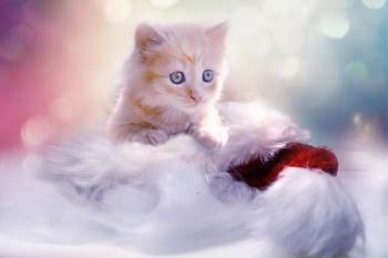 kitten-1856134_640.jpg