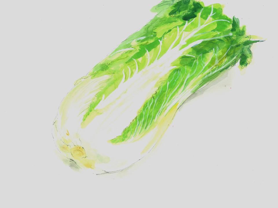 0119大寒タイニーシュシュ(ミニ白菜)