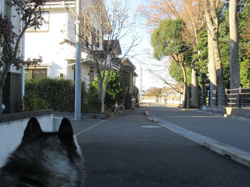 富士山見えるかな
