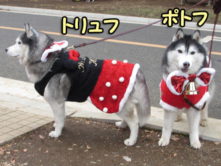 ハスキーズ・クリスマスウォーク2012