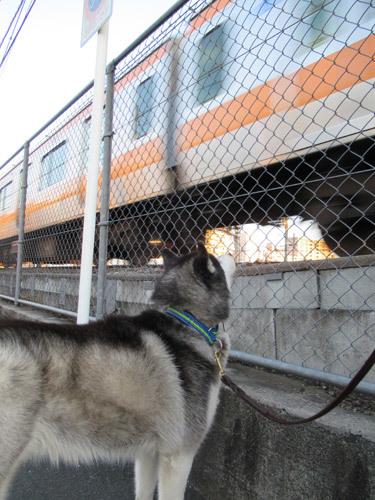 線路脇で電車観察