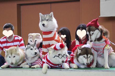 西日本プリケツハスキージュチーム