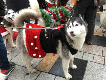 クリスマススフレ