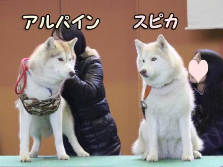 第12回ハスまみれ紹介タイム