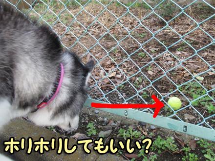 ボール発見